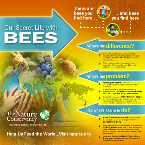 bee-infographic-picture